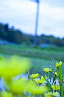 花をクローズアップするの写真・画像素材[2872416]