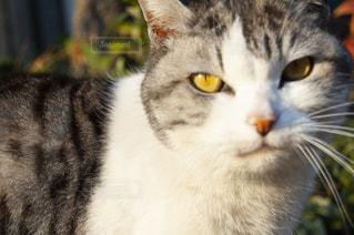 猫をクローズアップするの写真・画像素材[2872461]