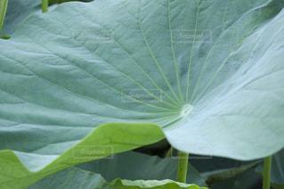 緑の植物のクローズアップの写真・画像素材[2872466]