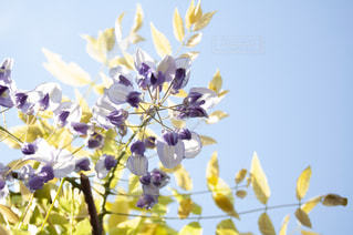 花をクローズアップするの写真・画像素材[2872484]