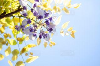 黄色い花のクローズアップの写真・画像素材[2872485]