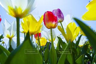 花瓶の中の黄色い花のクローズアップの写真・画像素材[2872490]