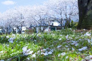 花畑のクローズアップの写真・画像素材[2872493]