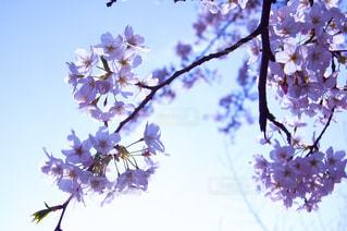 木の枝の花瓶の写真・画像素材[2872511]