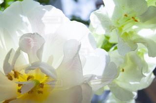 花をクローズアップするの写真・画像素材[2872524]