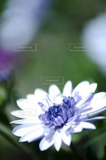 花のクローズアップの写真・画像素材[3118978]