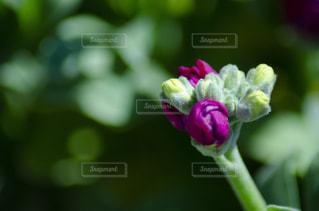 花のクローズアの写真・画像素材[3118983]