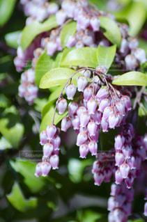 花のクローズアップの写真・画像素材[3118982]