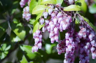 花のクローズアップの写真・画像素材[3118986]