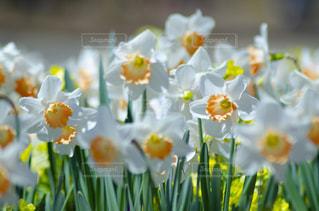 花のクローズアップの写真・画像素材[3118984]