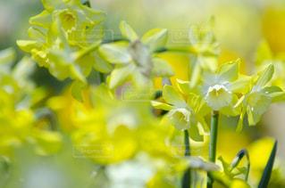 花のクローズアップの写真・画像素材[3118987]