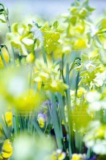 花のクローズアッの写真・画像素材[3118988]