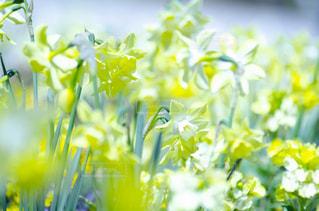 花のクローズアップの写真・画像素材[3118989]