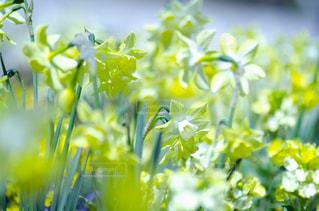 花のクローズアップの写真・画像素材[3118991]