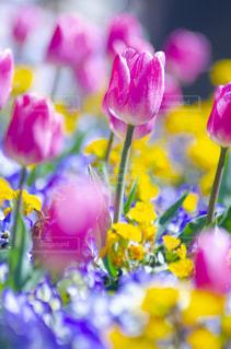 花のクローズアップの写真・画像素材[3118994]