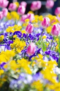 花のクローズアップの写真・画像素材[3118993]