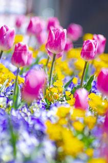 花のクローズアップの写真・画像素材[3119003]