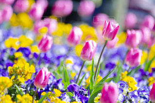 花のクローズアップの写真・画像素材[3118995]