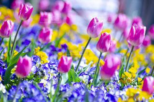 花のクローズアップの写真・画像素材[3119005]