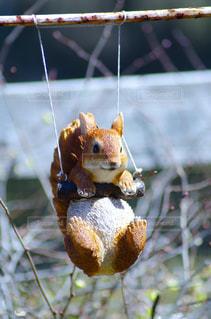 枝に座っている小鳥の写真・画像素材[3119000]