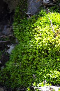 いくつかの茂みのクローズアップの写真・画像素材[3119315]