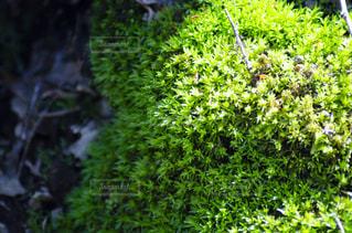 いくつかの茂みのクローズアップの写真・画像素材[3119316]
