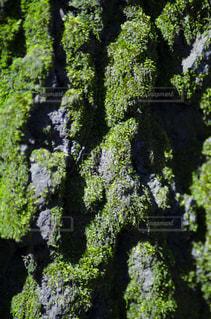 緑豊かな森の近くの写真・画像素材[3119312]