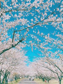 木のクローズアップの写真・画像素材[3090733]