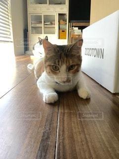 猫の写真・画像素材[105682]