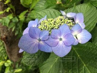 自然の写真・画像素材[105956]