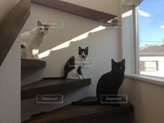猫の写真・画像素材[112295]