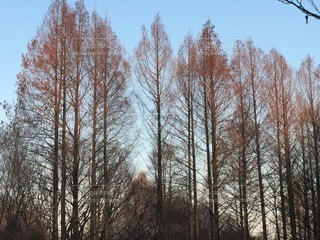 自然の写真・画像素材[112364]