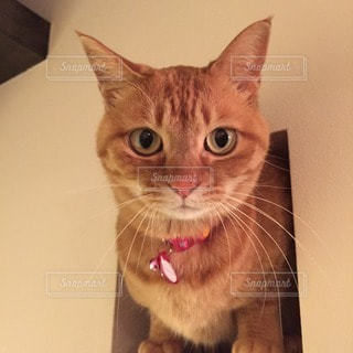 猫の写真・画像素材[112396]