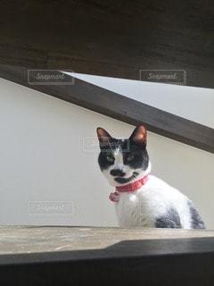猫の写真・画像素材[112401]