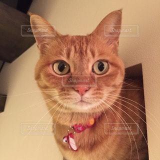 猫の写真・画像素材[112402]