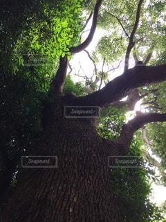 自然の写真・画像素材[112436]