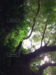 自然の写真・画像素材[112437]