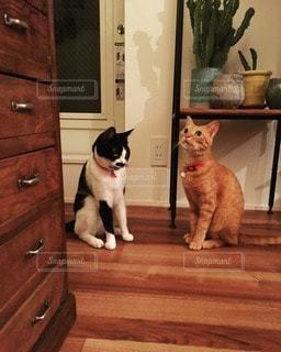 猫の写真・画像素材[112441]