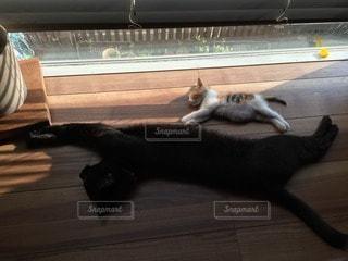 猫の写真・画像素材[112447]