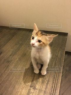 猫の写真・画像素材[112490]