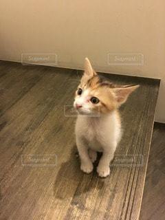猫の写真・画像素材[112501]