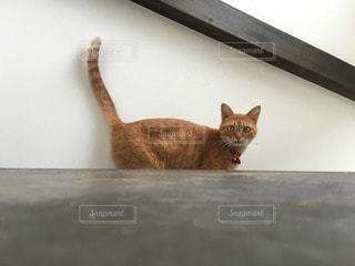 猫の写真・画像素材[112509]