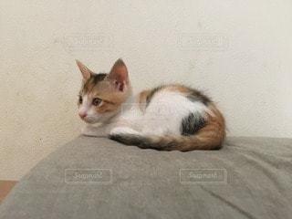 猫の写真・画像素材[112598]