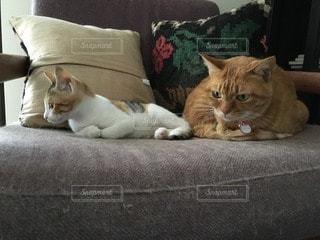 猫の写真・画像素材[112622]