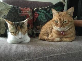 猫の写真・画像素材[112671]