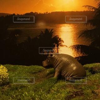 夕日の写真・画像素材[468982]