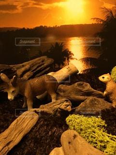 夕日の写真・画像素材[468987]