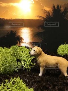 犬の写真・画像素材[468996]