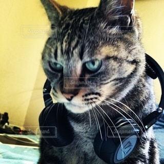 DJキャット‼︎の写真・画像素材[2733621]