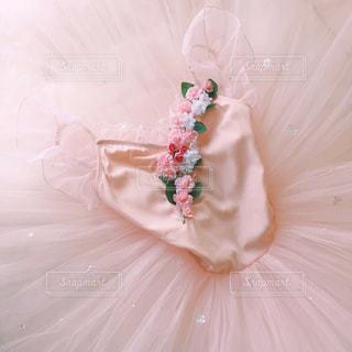ピンクと白の花の写真・画像素材[2736033]